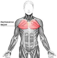 inflammation i bröstkorgen behandling